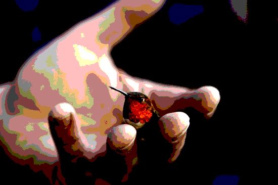hummingbird posterized 5